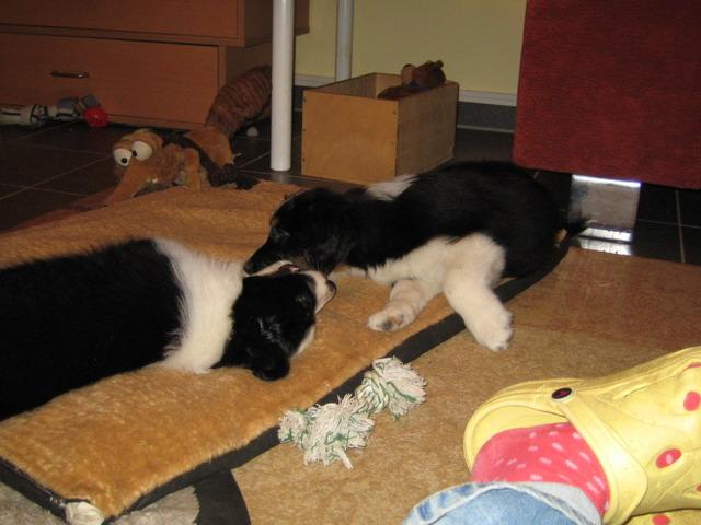 Durch wird das Kätzchen nach der Behandlung von den Würmern wieviel essen